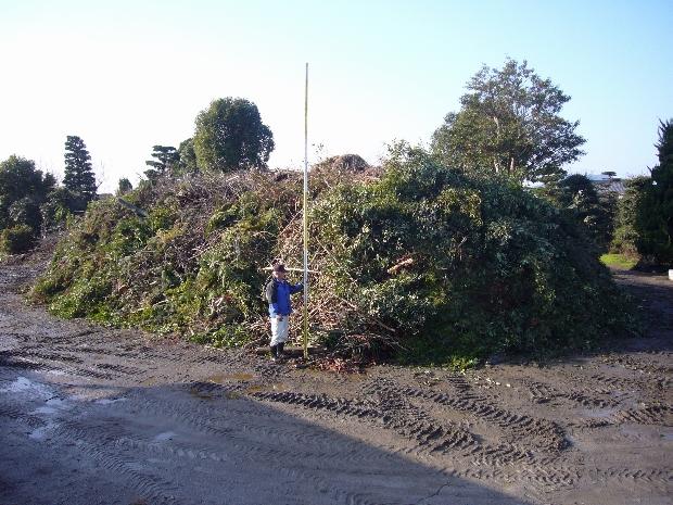 伐採、剪定した枝葉