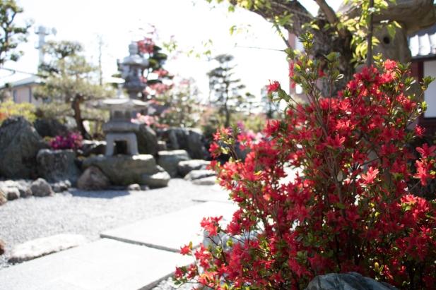 色とりどりの花々がお庭を彩ります